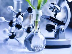 В России начат один из крупнейших научно-исследовательских проектов в сельском хозяйстве по сое