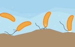 У бактерий нашли осязание