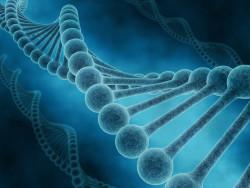 Сибирские ученые разработали систему анализа эволюции генных сетей
