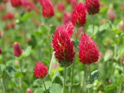 Белок из трав может поддержать производителей органических комбикормов в ЕС