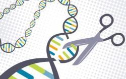 Редактирование генома показали на видео