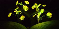 Светящиеся растения заменят фонари и светильники