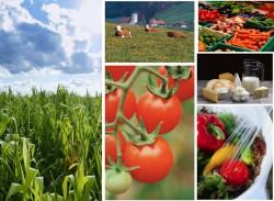 Фонд «Сколково» представит агроинновации на международной выставке в «Крокус Экспо»