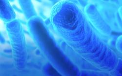 Бактерии будут делать основу для антимикробных повязок