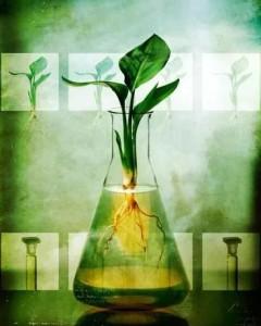 «Зеленый ассортимент»: маркетинговый ход или будущее бытовой химии?