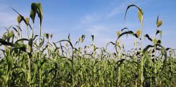 Растения с отредактированным геномом не попадут под закон о ГМО