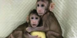 Китайские ученые первыми в мире клонировали обезьян