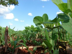 Эксперты прогнозируют динамичный рост рынка биопрепаратов в 2018 году