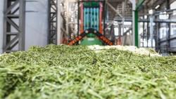 Воронежский завод по сушке биомасс нацелился на экспорт люцерны