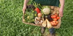Правительством одобрен законопроект об органическом сельском хозяйстве