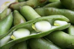 Генетические коллекции растений надо сохранять и преумножать