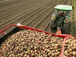 Ученые НИИ сельского хозяйства Республики Коми вывели перспективные сорта картофеля