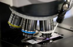Новый фермент позволит наладить производство толуола из биомассы
