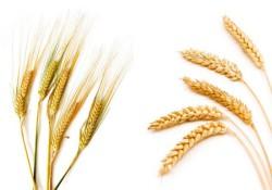 Стратегические направления развития АПК обсудили на заседании Агробизнесклуба