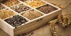 BASF собирается выкупить семеноводческий бизнес Bayer
