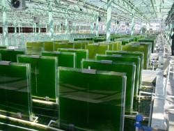Новый завод биополимеров в Татарстане