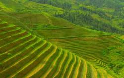 В Китае запущена программа здорового земледелия