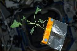 Биология уходит в космос: о чем говорили на симпозиуме «Биофабрикация в космосе»