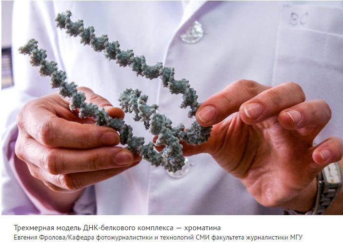 ДНК-белк мод