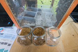 Инновационные мухи, или «Люся» как источник зоопротеина