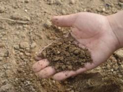 Немецкие ученые: микропластик попадает в органические удобрения