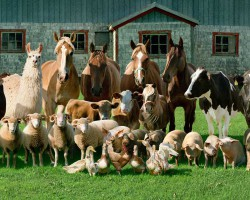 В Госреестре появились новые породы сельскохозяйственных животных