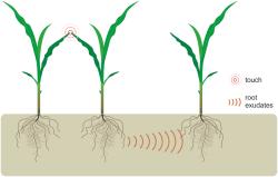 Шведские биологи пришли к выводу, что растения общаются друг с другом корнями