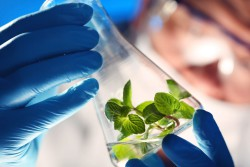 Глава Московской школы управления «Сколково» оценил долю РФ на рынке биотехнологий