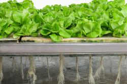 Победитель программы «Старт» разрабатывает новую методику выращивания лекарственных растений