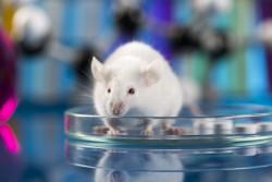 27-29 сентября 2018 года, Нижний Новгород⇒Конференция Rus-LASA для специалистов по работе с лабораторными животными
