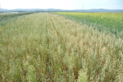 Красноярские ученые: чтобы получить высокий урожай, землю пахать не обязательно