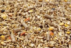 ГМО-стандарты на комбикорма будут усовершенствованы