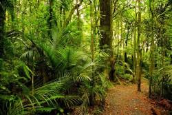 Экологи оценили вред от сельского хозяйства в тропических лесах