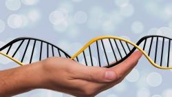 Алтайские генетики начали выращивать эмбрионы КРС