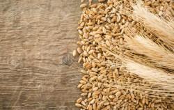 Завод по переработке зерна за 12,2 млрд руб. построят в Новосибирской области к 2022 г.