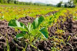Био-Хутор поделилась опытом органического земледелия в рамках семинара ФГБУ «Россельхозцентр»