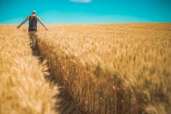 Способность наночастиц повышать урожайность агрокультур изучают российские ученые