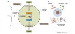 Разработан фотосинтетический двигатель для искусственных клеток