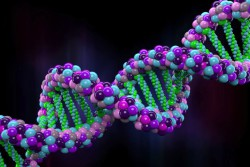 Горизонтальный обмен генами называли ключевым фактором эволюции млекопитающих