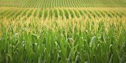Европейский суд приравнял изготовленные с помощью CRISPR-продукты к ГМО