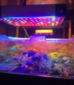 Тимирязевка присоединилась к проекту по выращиванию растений и рыб по технологиям гидро-, аэро- и аквапоники