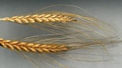 Минсельхоз представил новую версию агропрограммы