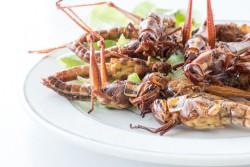 Ученые рассказали, почему люди должны начать есть насекомых