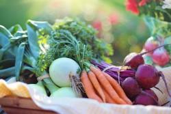 Созданы новые обогащенные полезными веществами продукты