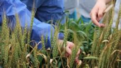 Здоровье растений – трансграничная проблема: 20 стран участвуют в обсуждении международных стандартов