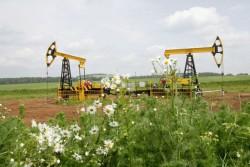 В Томске представят разработки в области рационального природопользования и экологии