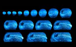 Новый микроскоп показал рост каждой клетки эмбриона мыши