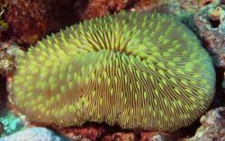 Личинки кораллов впервые успешно пережили цикл заморозки