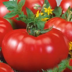 Биотехнологи заново одомашнили томаты с помощью генного редактора CRISPR