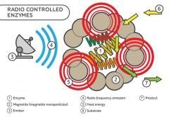 Российские ученые из университета ИТМО представили ферменты с возможностью дистанционного управления